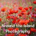 Around the Island Photography